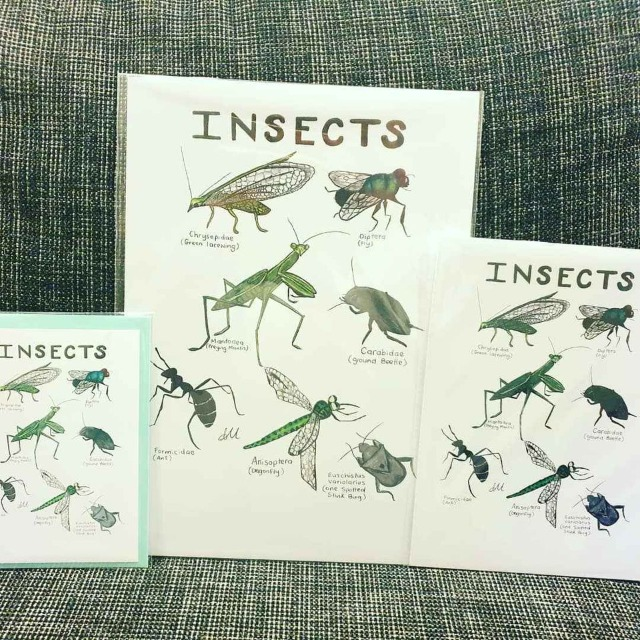 Art & Crafts Art Prints : A5 Print, Insect Print, Insect Illustration, Insect Wall Decor