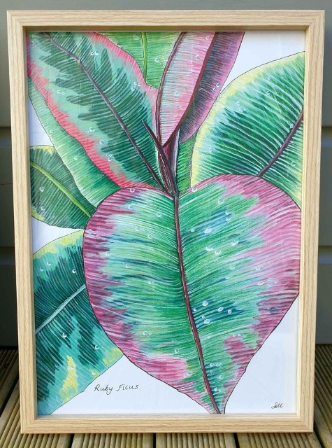 Art & Crafts Art Prints : Greeting Card + Envelope, Ruby Ficus Print, Ruby Ficus Illustration