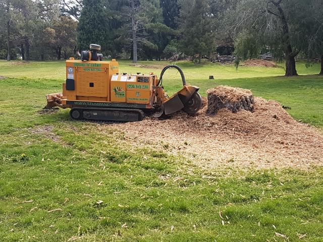Services Other Services Others : Stump Grinding Hamilton